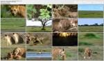 Królowe zwierz±t / Lion Queen (2009) PL.TVRip.XviD / Lektor PL